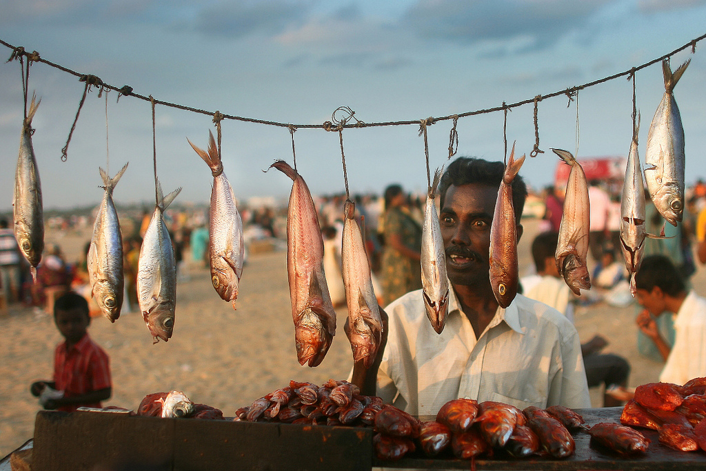 fishy, chennai, india. twenty ten