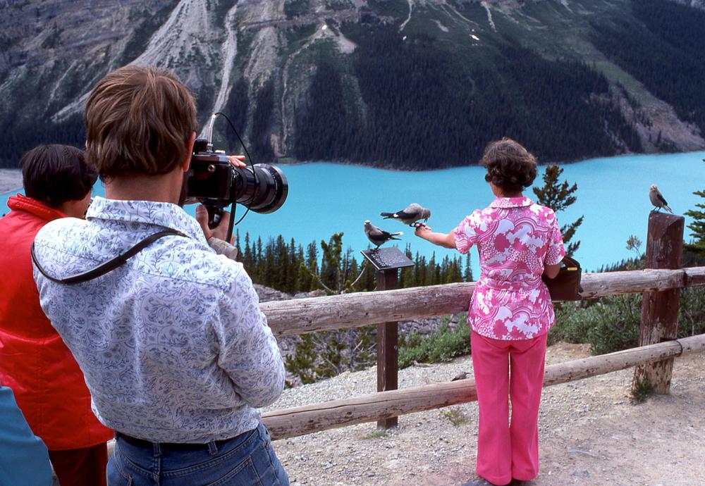 peyto lake: july, seventy seven - pop snap